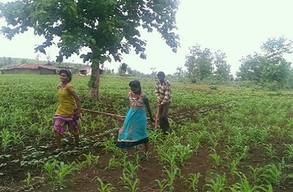 girls  teenager  agriculture  Sehore  MP  poor  poverty  bullocks  fields  tilling